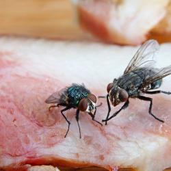 West London Pest Control   West London Pest Control - Fly